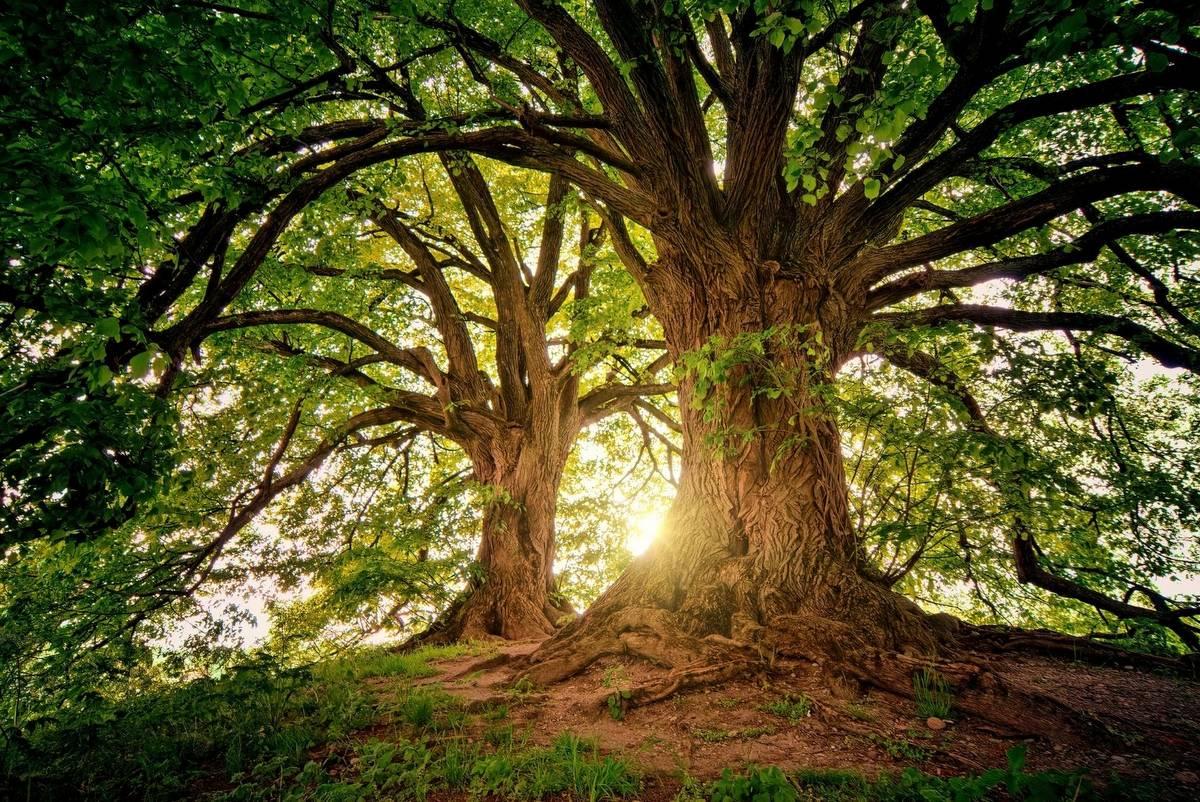 Holzhausbau - Umwelt und Nachhaltigkeit