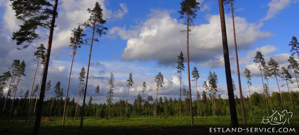 ubuntu natur in estland