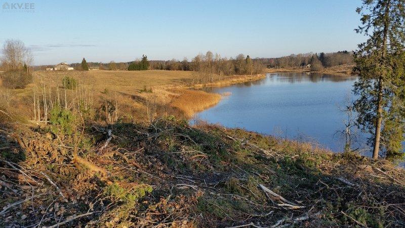 3,2 ha waldgrundstück